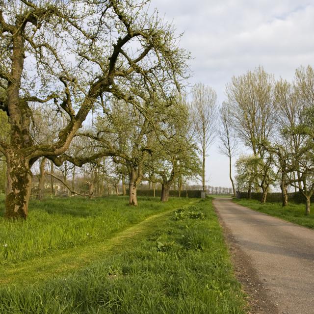 """""""Fruitbomen; Orchards"""" stock image"""