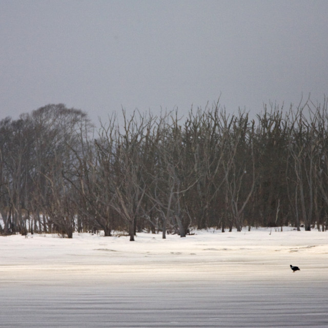 """Bevroren meer Hokkaido, frozen lake Hokkaido"" stock image"