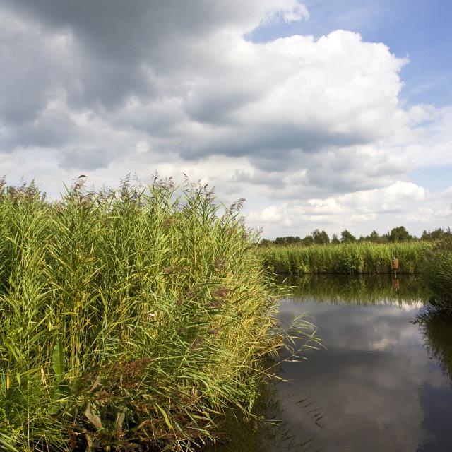 """""""Weerribben, Overijssel, Netherlands"""" stock image"""