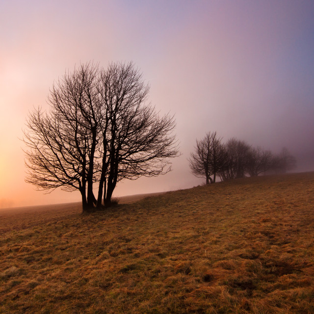 """""""Tree in the fog"""" stock image"""