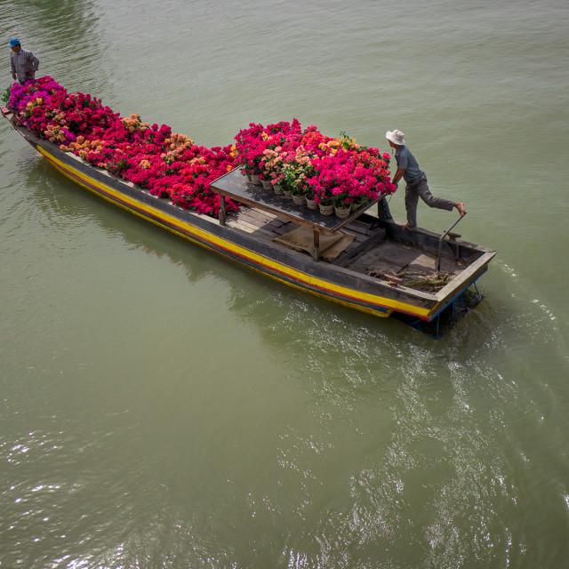 """Flower cargo boat"" stock image"