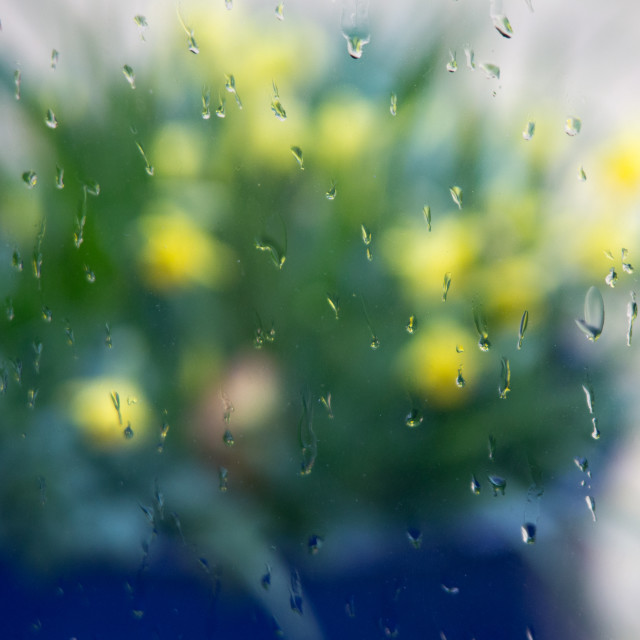"""Spring rained off"" stock image"