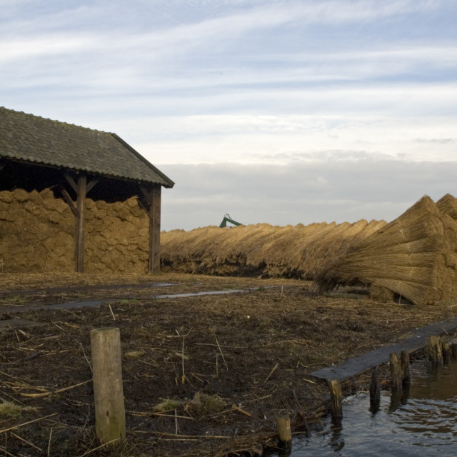 """""""Reed storage, Riet opslag"""" stock image"""