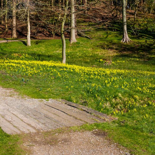 """""""Savill Garden panorama"""" stock image"""