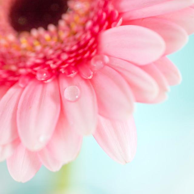 """Pink Flower"" stock image"