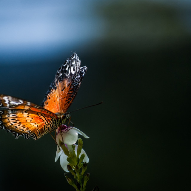 """""""Catch the morning light"""" stock image"""