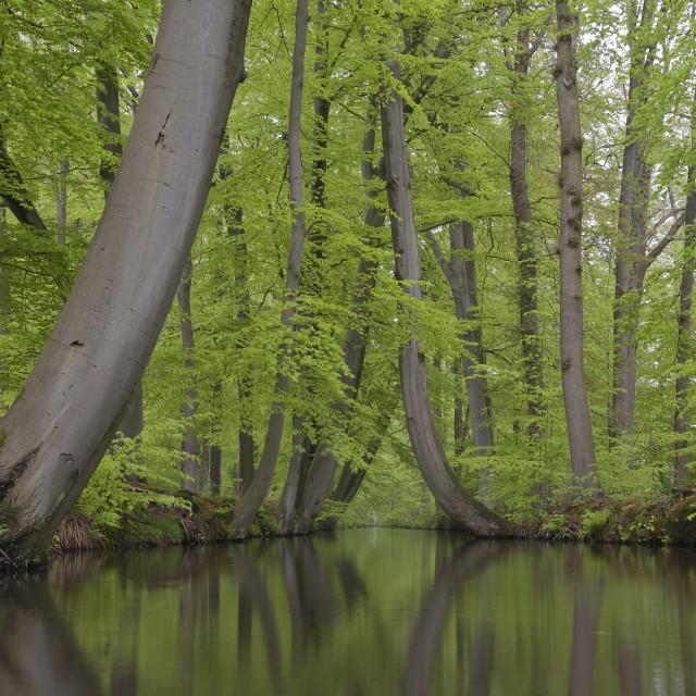 """""""Voorjaarsversie van de Twickelervaart; Twickelervaart at Spring"""" stock image"""