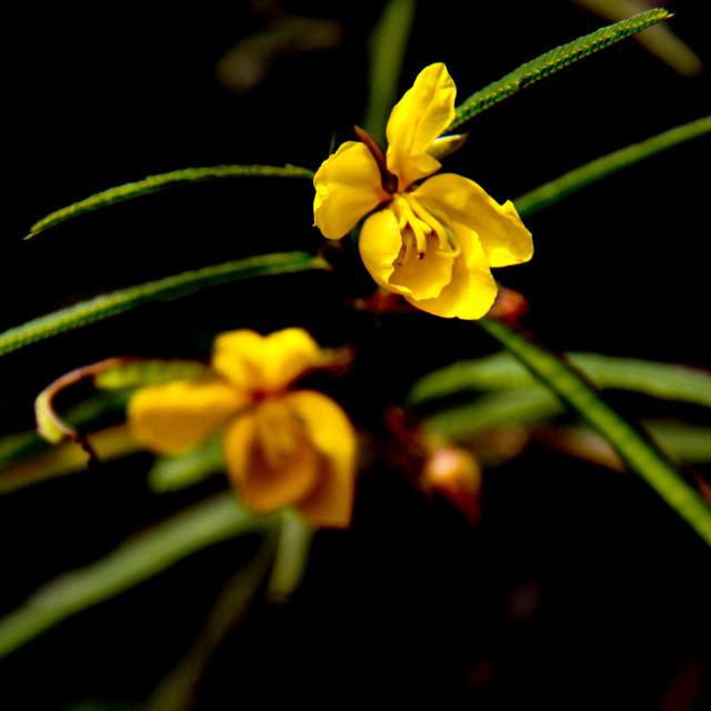 """""""bush flower"""" stock image"""