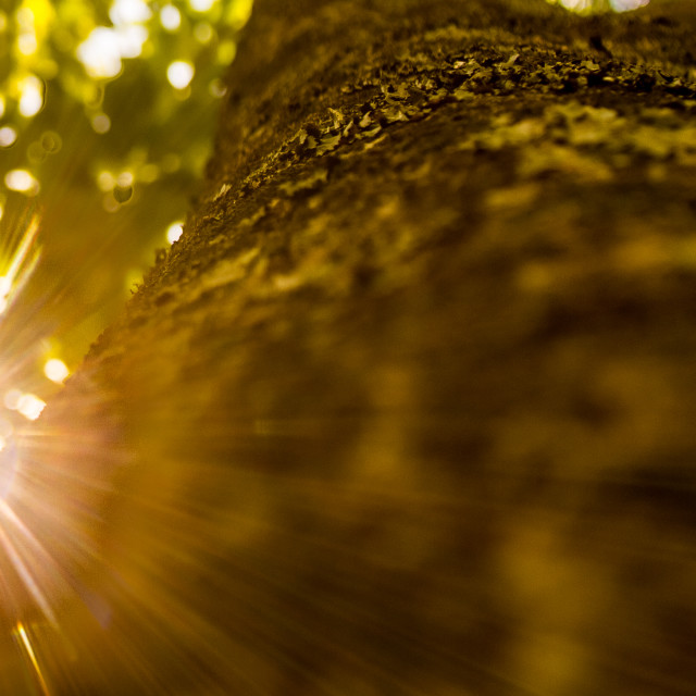 """Sunlight"" stock image"