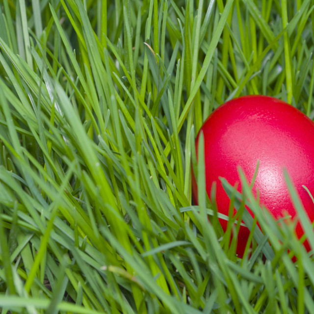 """""""Red Easter Egg in the Grass Closeup"""" stock image"""