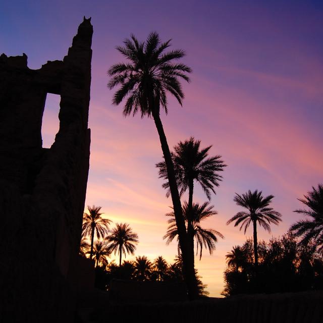"""A Palm Sunset"" stock image"