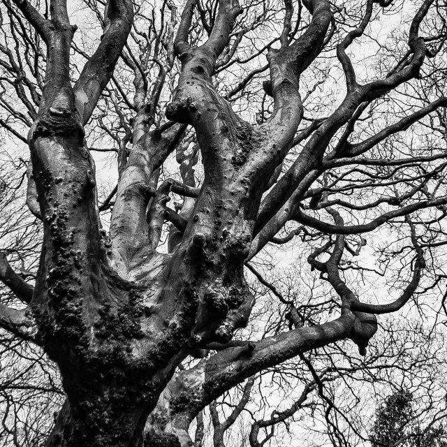 """Gnarly Tree"" stock image"