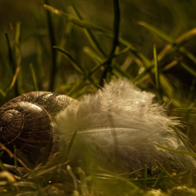 """""""Snail and Plumage friends"""" stock image"""