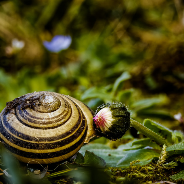 """""""Spiral of Snail and the Margherita"""" stock image"""