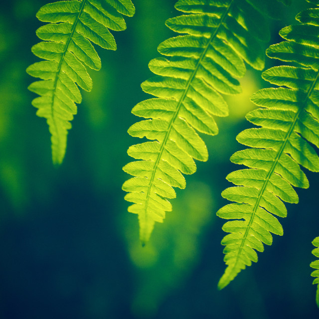 """green plant"" stock image"