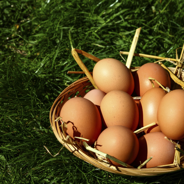 """Basket of eggs"" stock image"