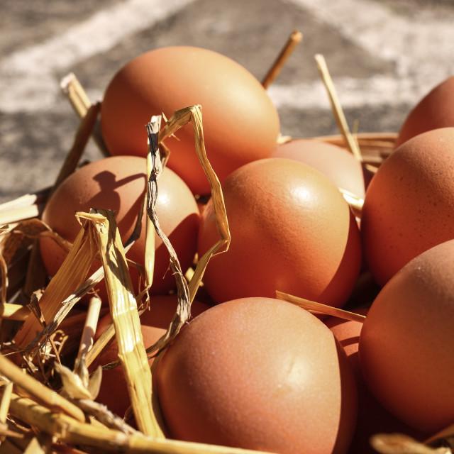 """""""Free range eggs"""" stock image"""