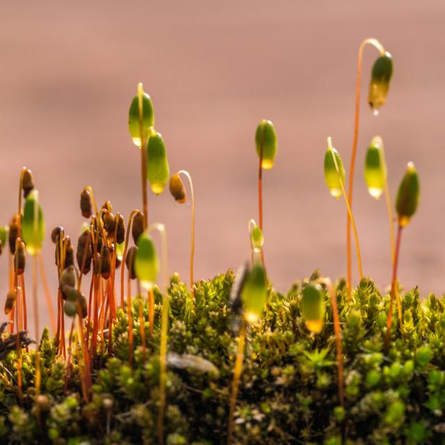 """Mini plants"" stock image"