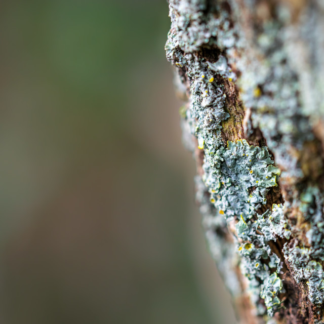 """Moss on the trunk with space for text"" stock image"