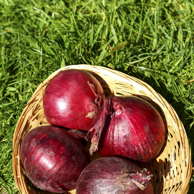 """""""Red onions"""" stock image"""