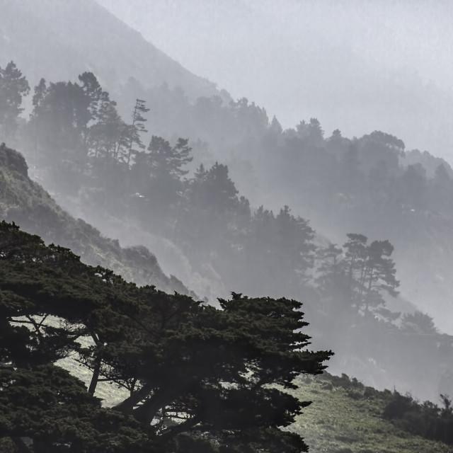 """""""Foggy Coast"""" stock image"""