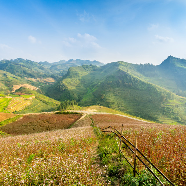 """Blooming season in Ha Giang"" stock image"