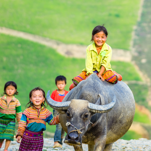 """the little girl Hmong Ethnic Minority People and water buffalo"" stock image"