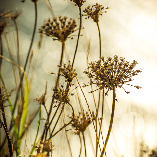 """Wild plants on the blurred background"" stock image"