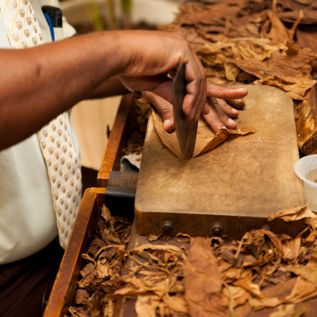 """""""Hand making cigars from tobacco leaves, traditional product of Cuba."""" stock image"""