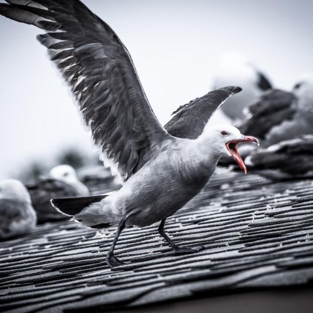 """Angry Bird"" stock image"