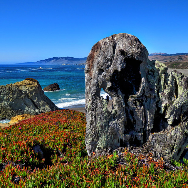 """Bodega Bay"" stock image"