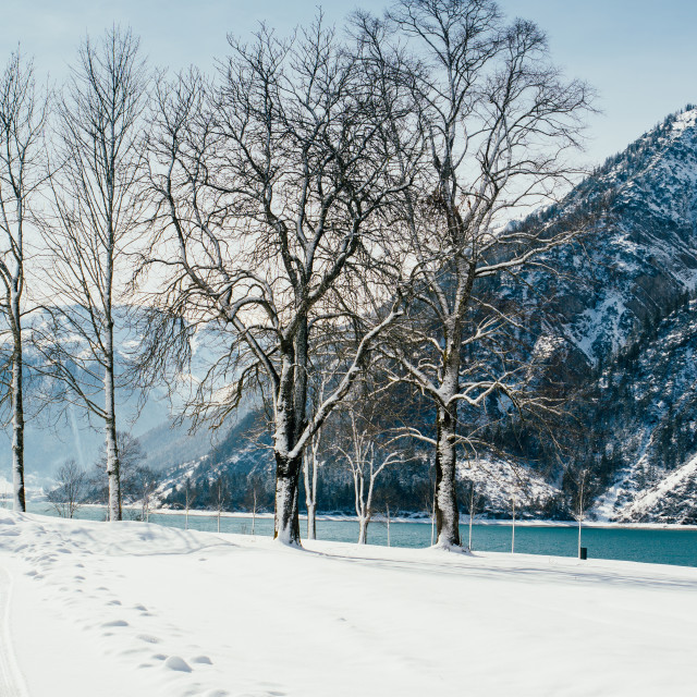 """Trees By The Winter Lake"" stock image"