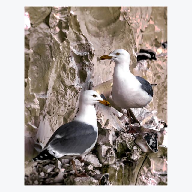 """Beacy Head Seagulls"" stock image"