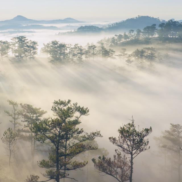 """Beauty in fog"" stock image"