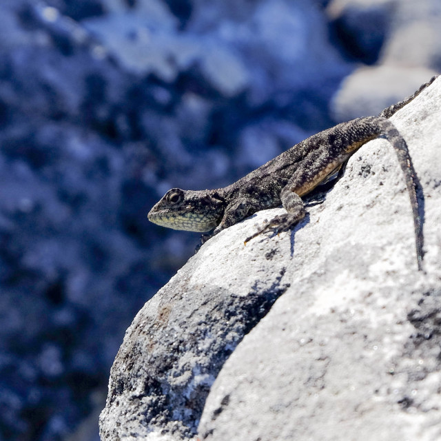 """Lizard life"" stock image"