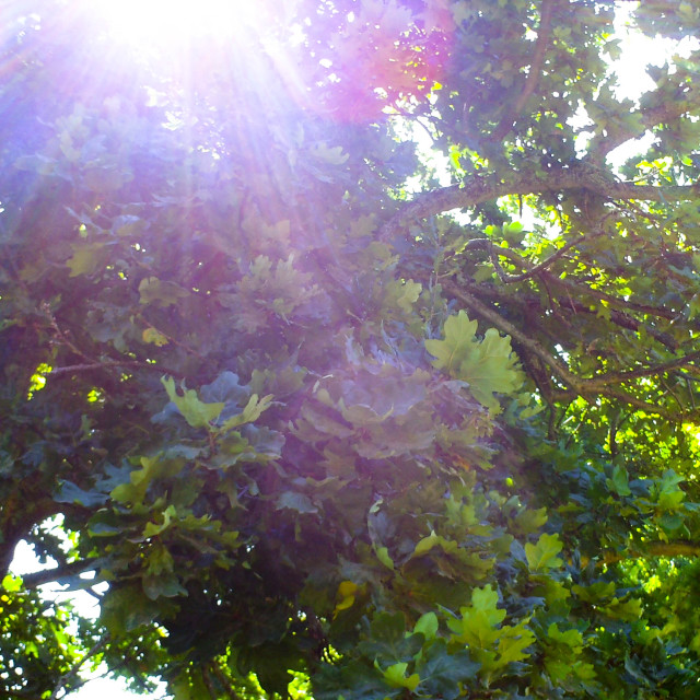 """Shining through the leafy branches"" stock image"