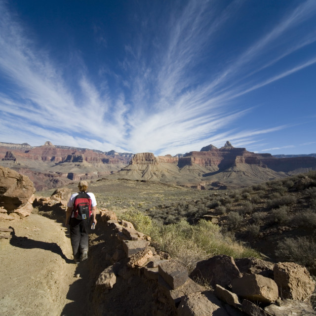"""""""HIKING DOWN INTO THE GRAND CANYON"""" stock image"""