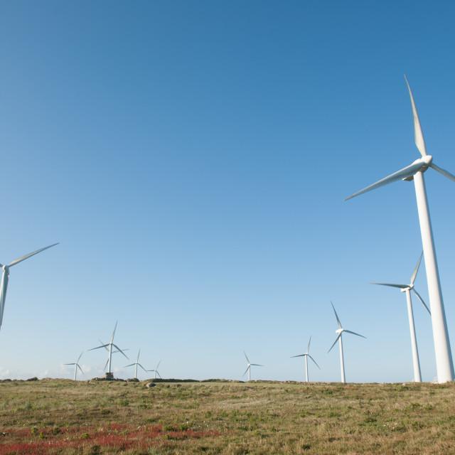 """Wind Farm"" stock image"