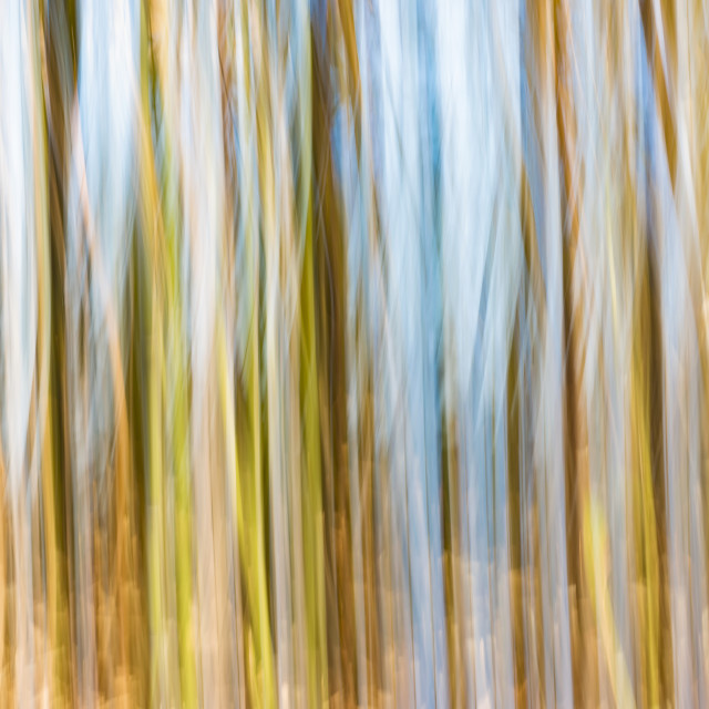 """""""Bamboo and Water Abstract"""" stock image"""
