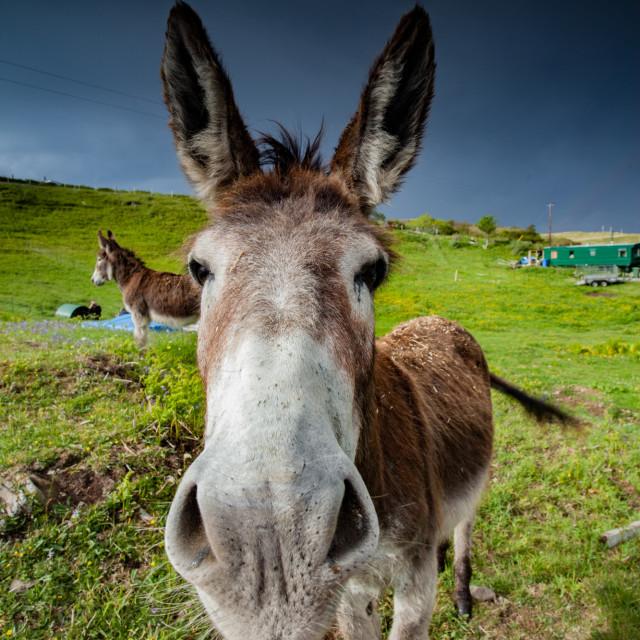 """""""A Donkey"""" stock image"""