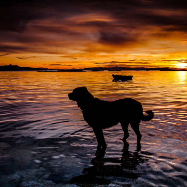 """a dog and a sunset"" stock image"