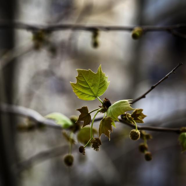 """Spring Springing"" stock image"