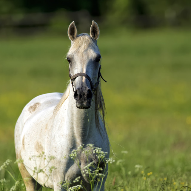 """Horse in a clearing"" stock image"