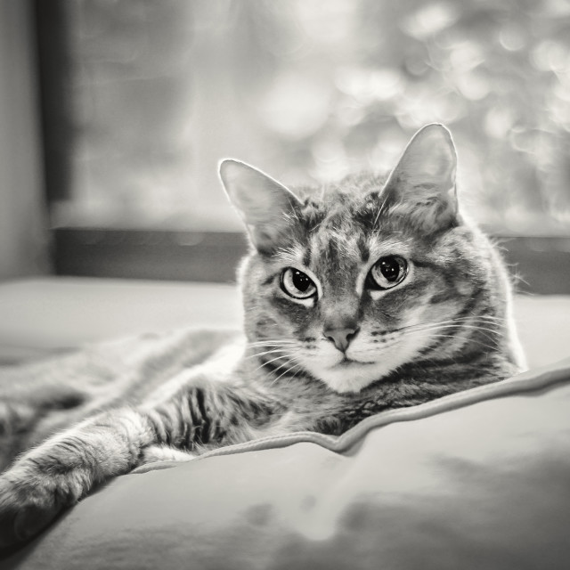 """""""Cat Lounging by the Window"""" stock image"""