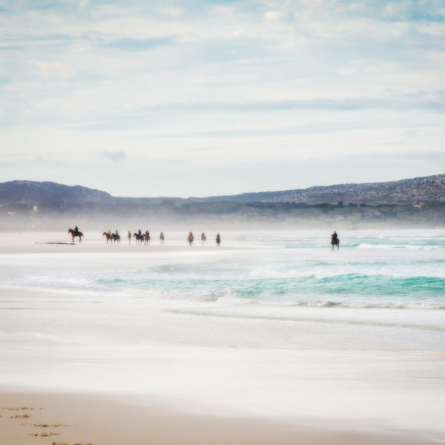 """Horses on a beach"" stock image"