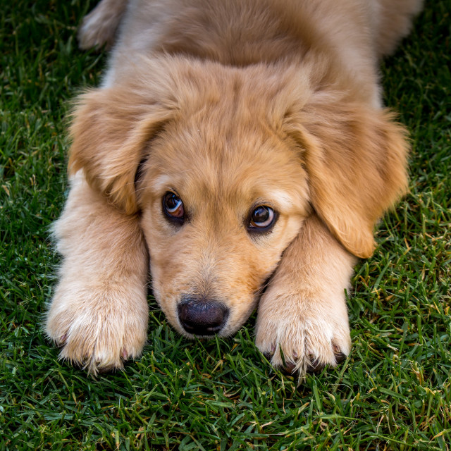 """Sad dog"" stock image"