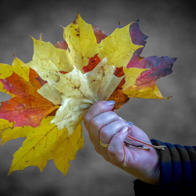 """""""Leafs in the autumn"""" stock image"""
