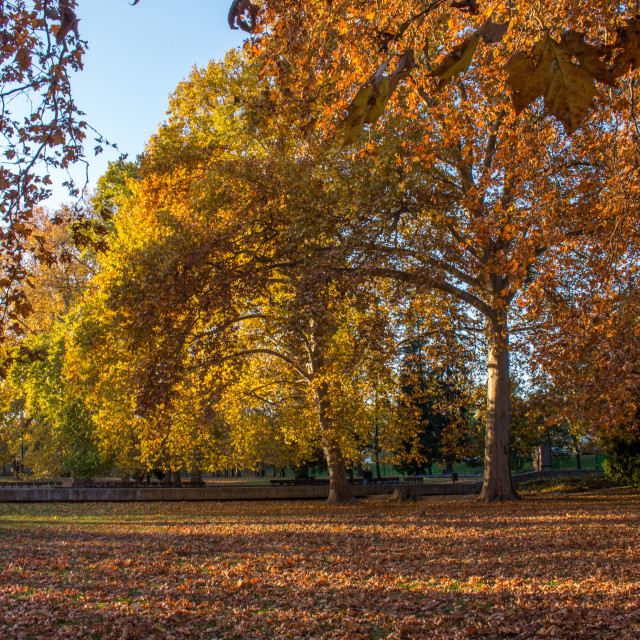 """""""Park during a autumn"""" stock image"""