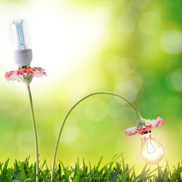 """Energy efficiency lighting bulbs environmental conservation"" stock image"
