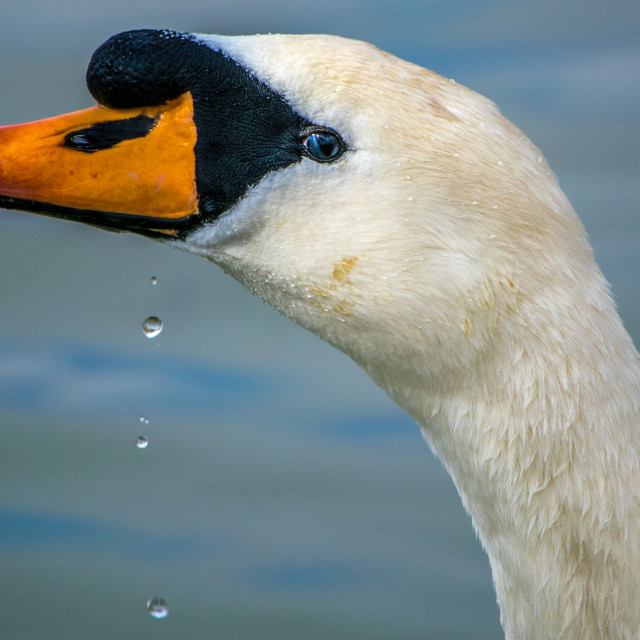"""""""Droplets"""" stock image"""